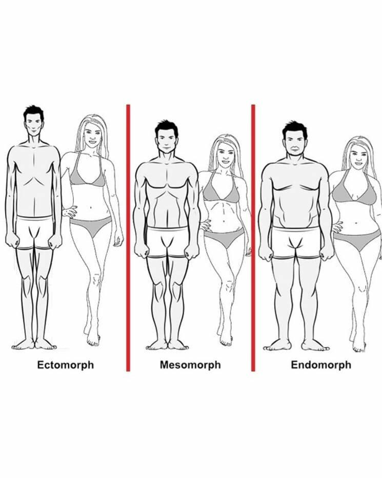 Как узнать по типу телосложения, кто ты — эктоморф, мезоморф или эндоморф: тест, определение по запястью. кто такой эктоморф, мезоморф, эндоморф: описание строения мужского и женского тела, фото