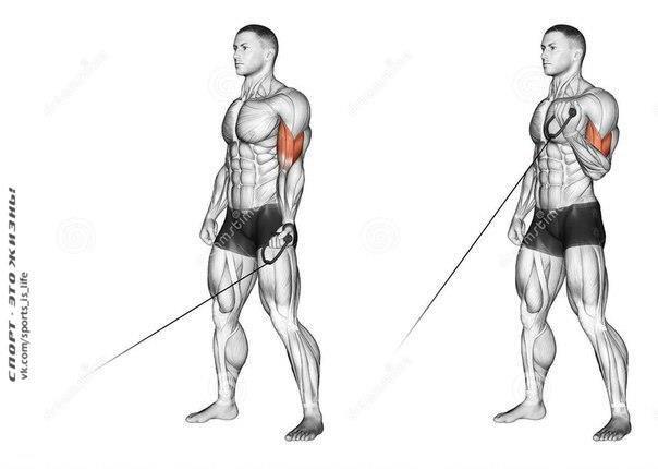Бицепс – упражнения и особенности тренировки.