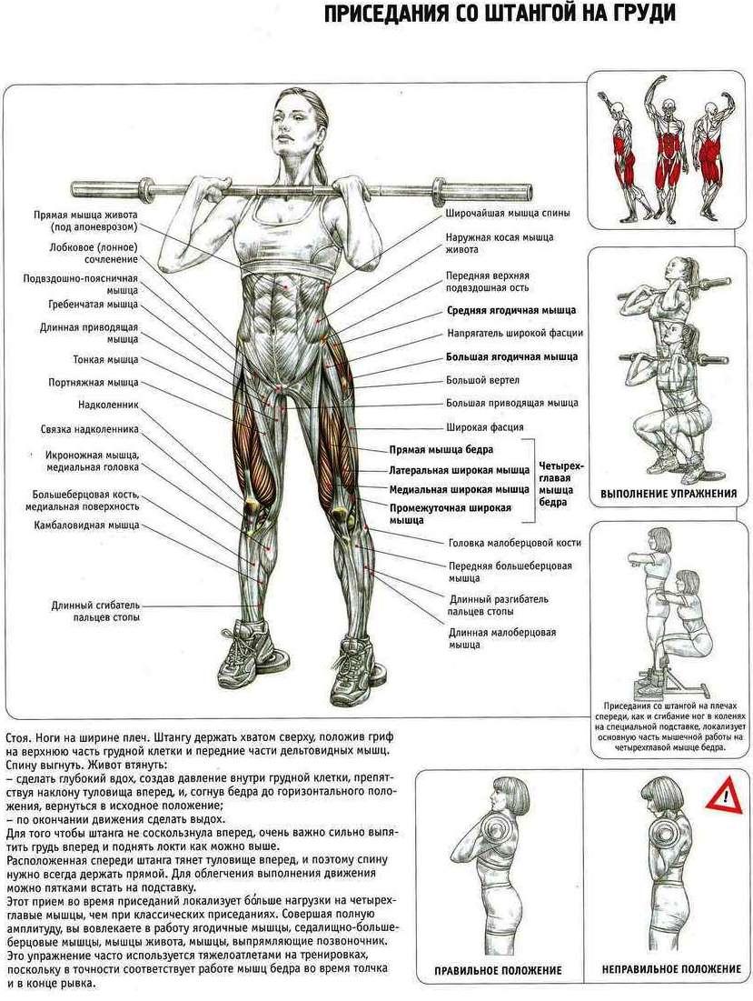 Инструктаж и техника: приседания с собственным весом и со штангой, как правильно делать присед | rulebody.ru — правила тела