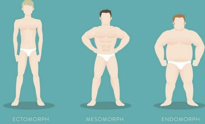 Мезоморф —питание и тренировки. как определить — характеристики