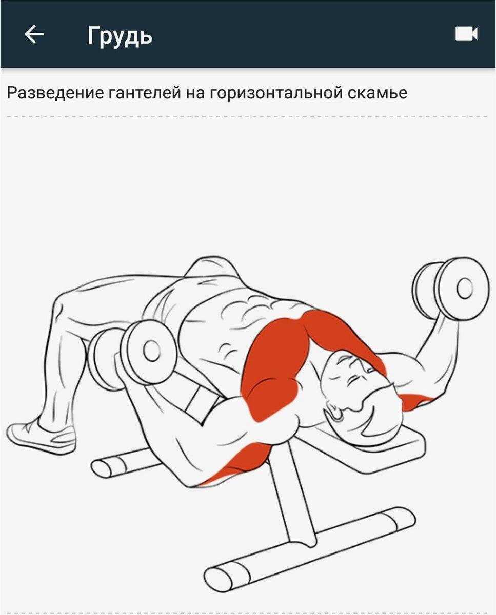 Жим гантелей лежа на скамье: основные ошибки и рекомендации — спорт и красота