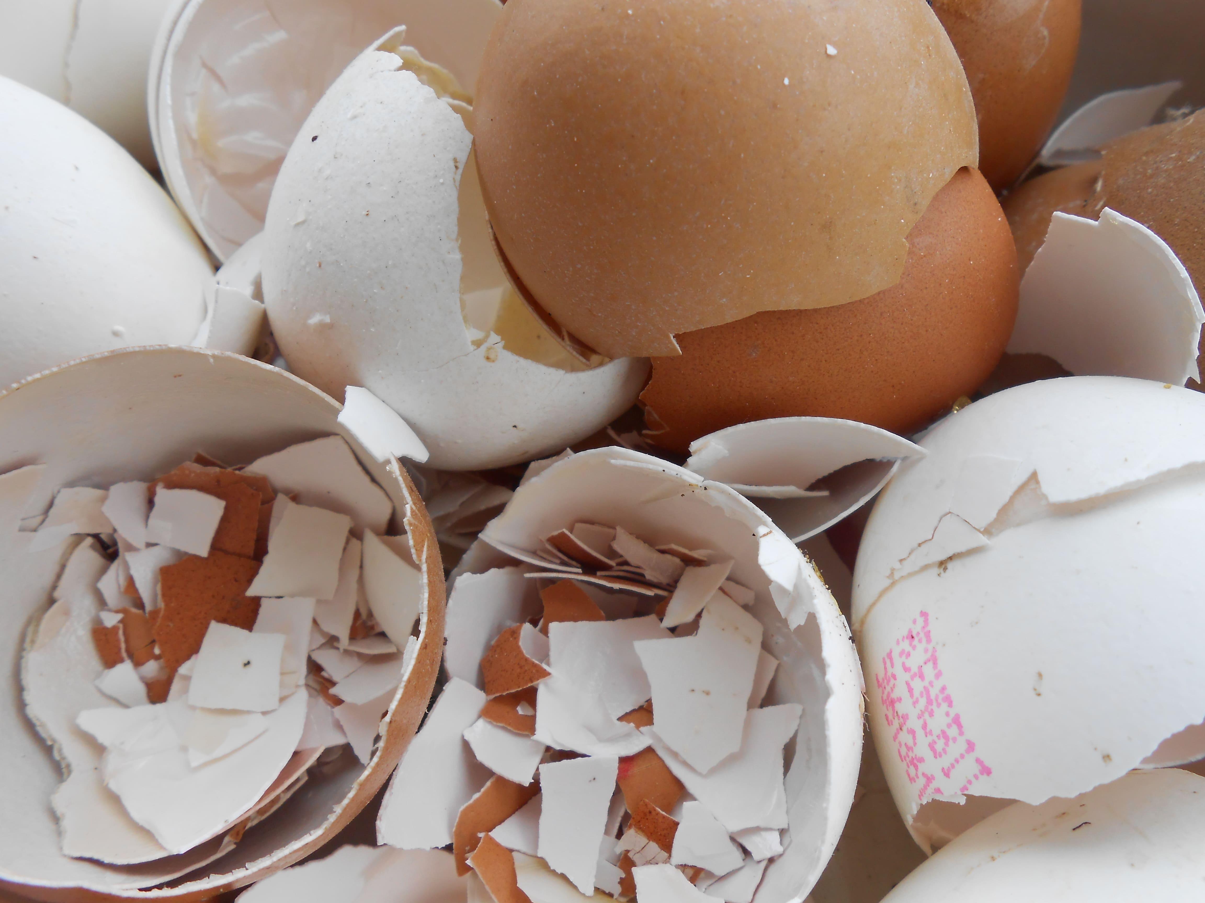Яичная скорлупа для беременных польза и вред. применение яичной скорлупы при бронхиальной астме. яичная скорлупа в косметологии