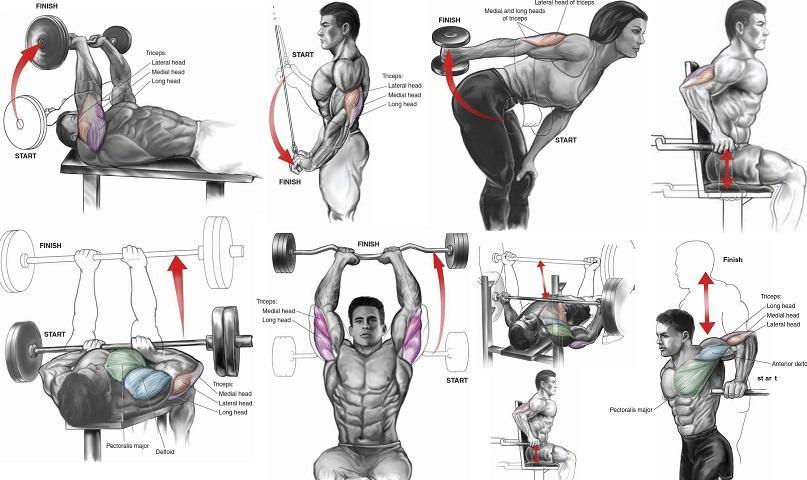 Базовые упражнения для тренировки трицепса