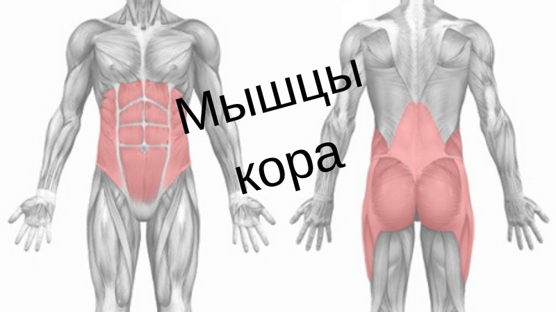 Мышцы кора: их особенности и тренировка