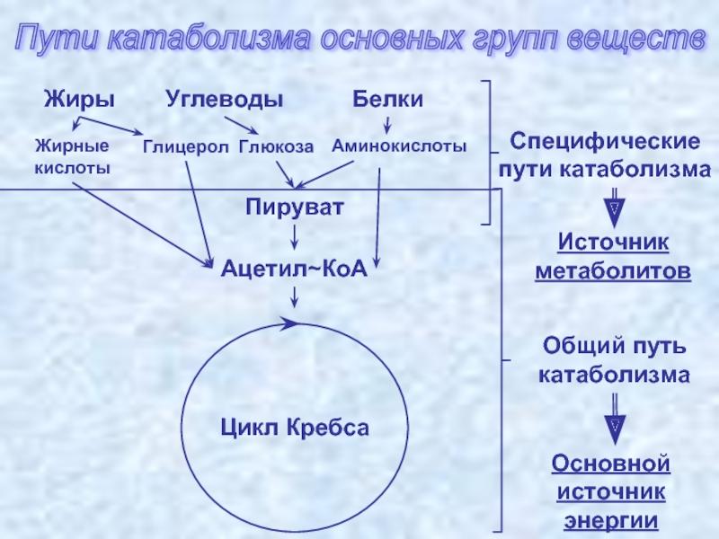 Метаболизм микроогранизмов. катаболизм, анаболизм. - alexmed.info