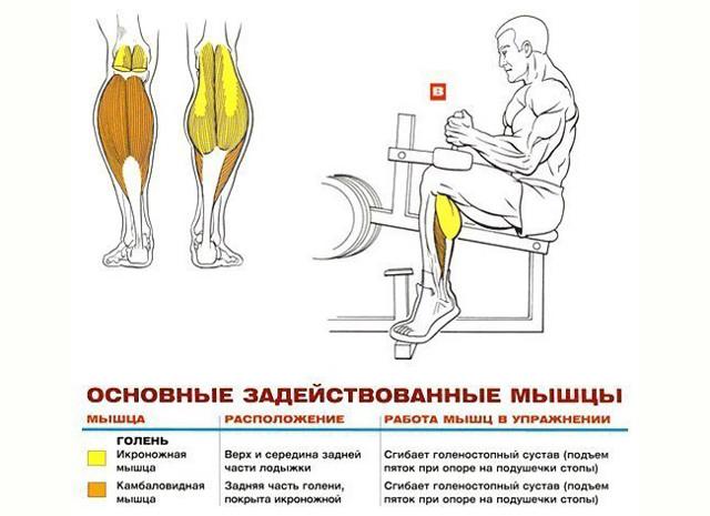 Подъем на носки - как делать правильно? эффективная техника выполнения упражнения (фото-инструкция)