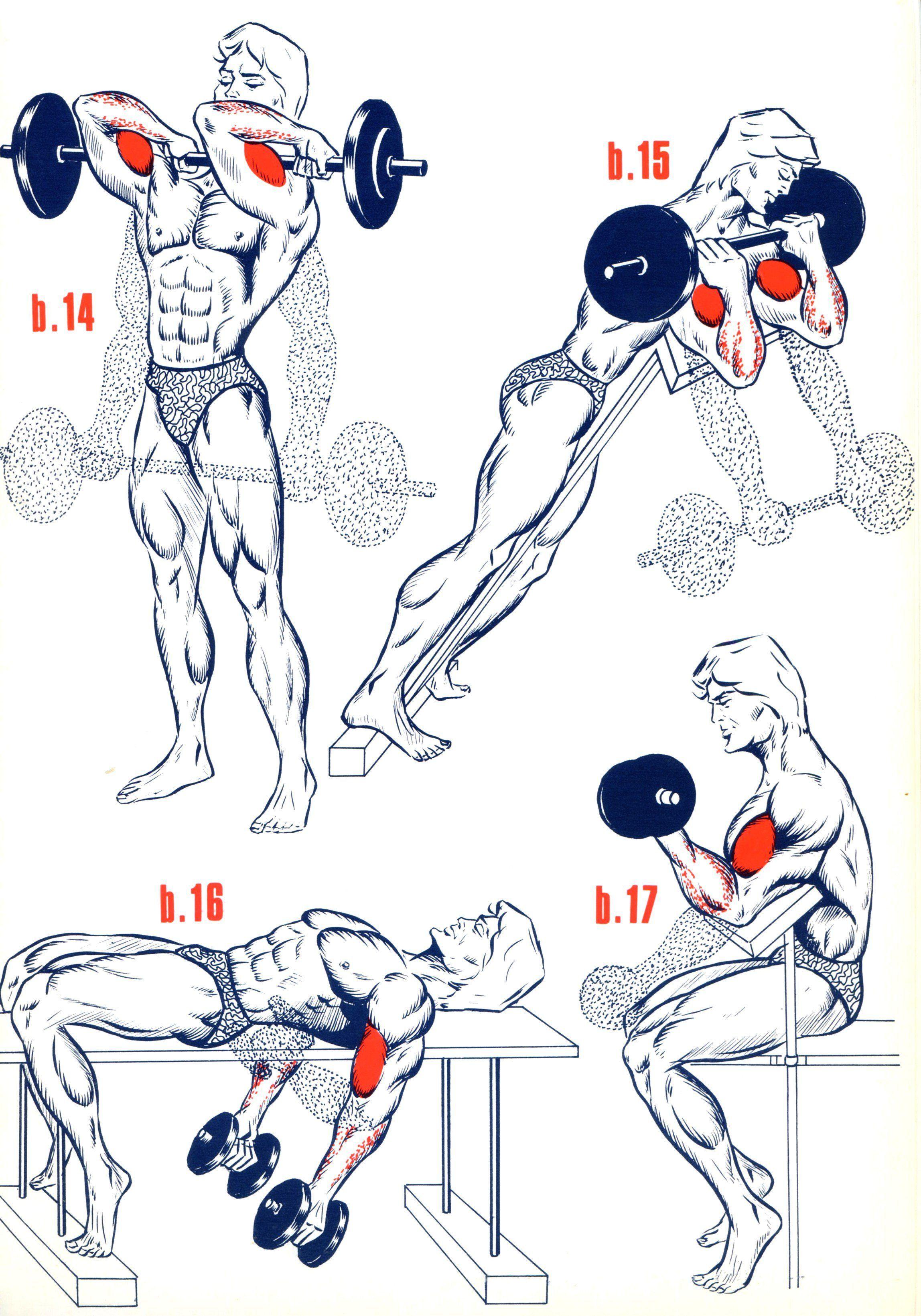 Как растут мышцы? что влияет на рост мышечной ткани?