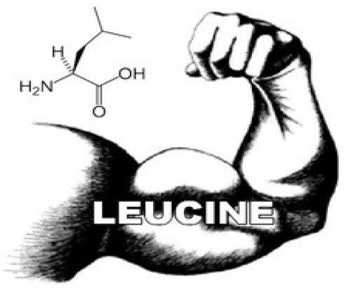 Лейцин – важнейшая незаменимая аминокислота в составе ВСАА, в чем ее преимущество над другими
