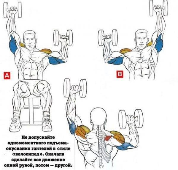 Как правильно качать руки гантелями