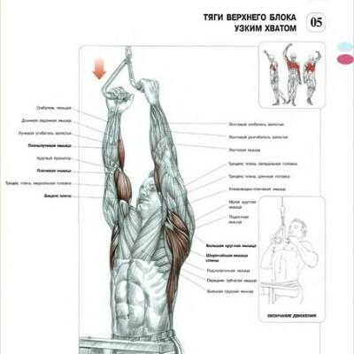 Тяга вертикального блока – крутое упражнение для развития v-образной спины!