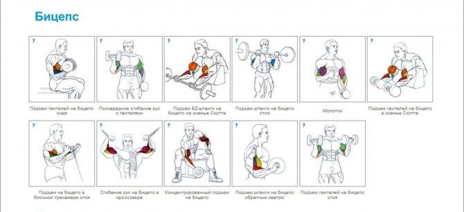 Как накачать мышцы: пособие для новичков