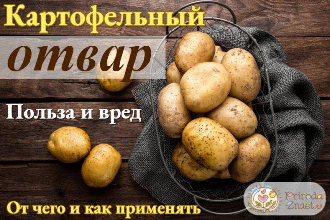 Польза и вред картофеля, лечебные свойства, состав, калорийность, приготовление