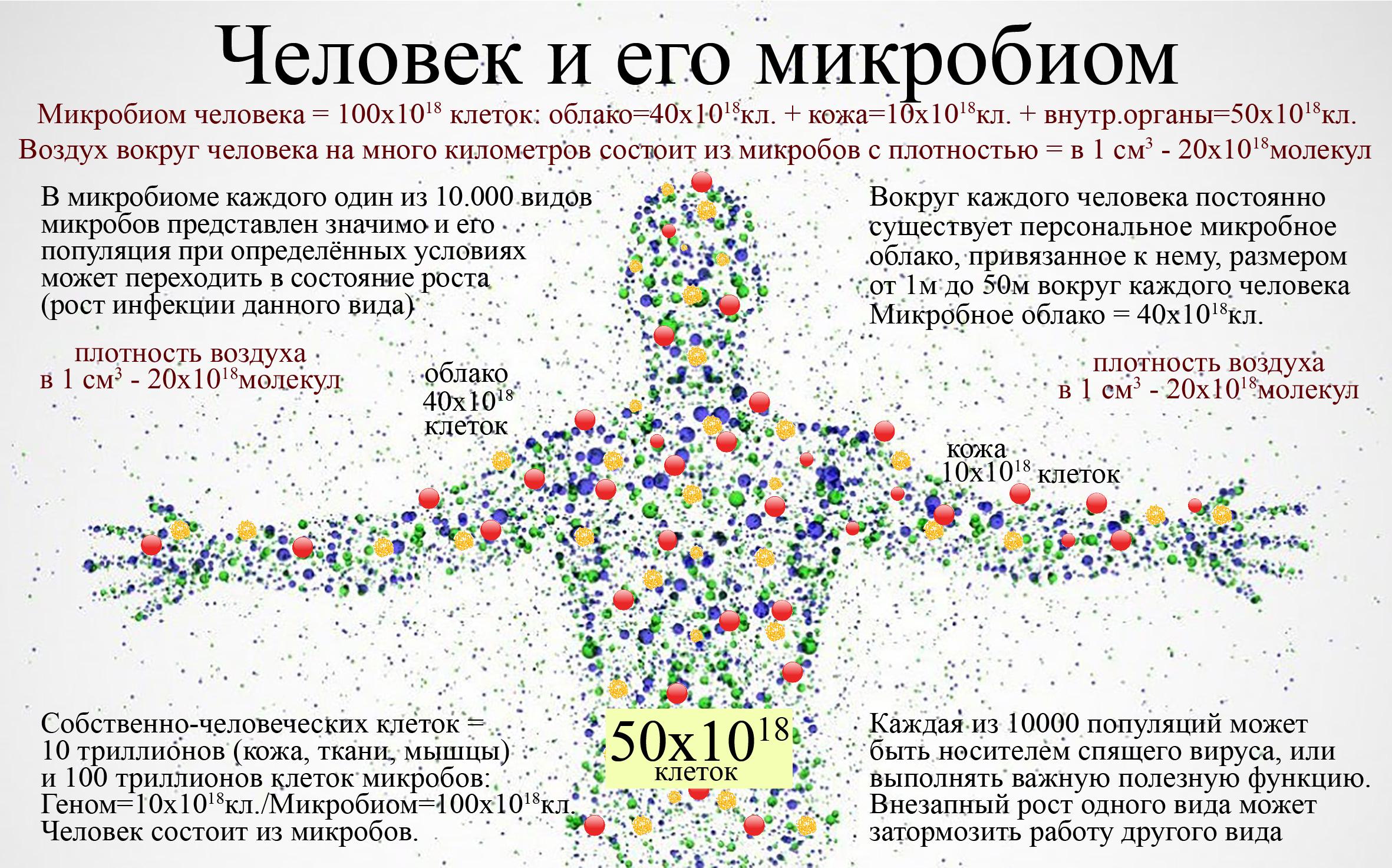 Мы и наши микробы