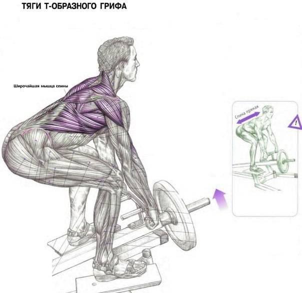 Становая тяга с трэп-грифом: техника выполнения упражнения