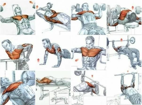 Как качать грудные мышцы в тренажёрном зале: лучшие упражнения