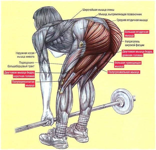 Мёртвая тяга (становая на прямых ногах)- техники выполнения