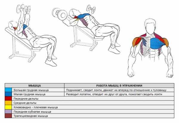 Как накачать верхнюю часть грудных мышц: лучшие упражнения