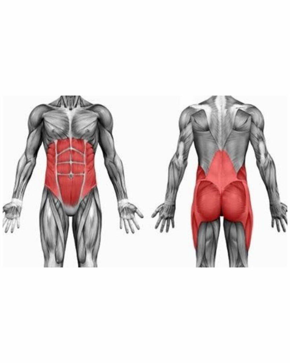 Почему следует укреплять мышцы кора - dailyfit