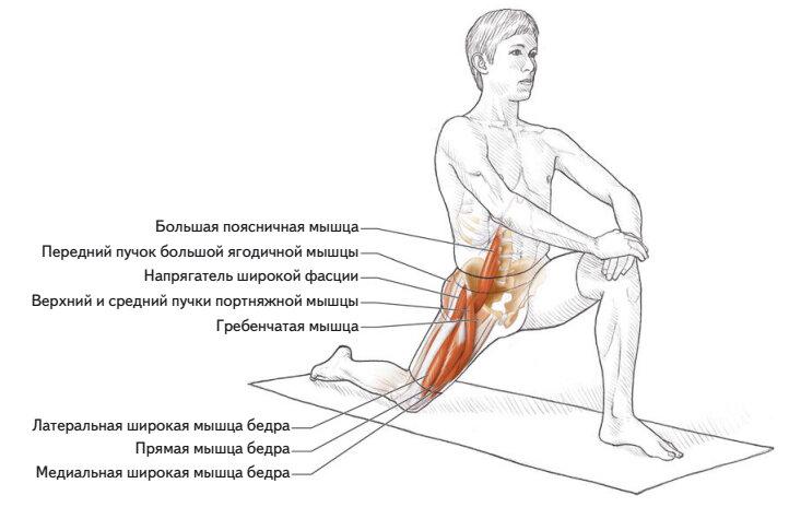Подвздошно-поясничная мышца — где находится, как расслабить и вытянуть