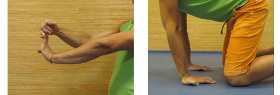 Брахиалис: как накачать плечевую мышцу, лучшие 7 упражнений