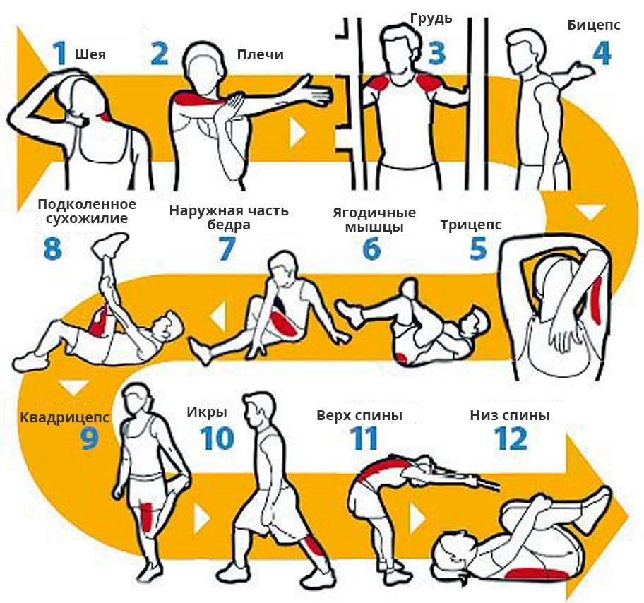 Лучшие упражнения на растяжку всех групп мышц после тренировки