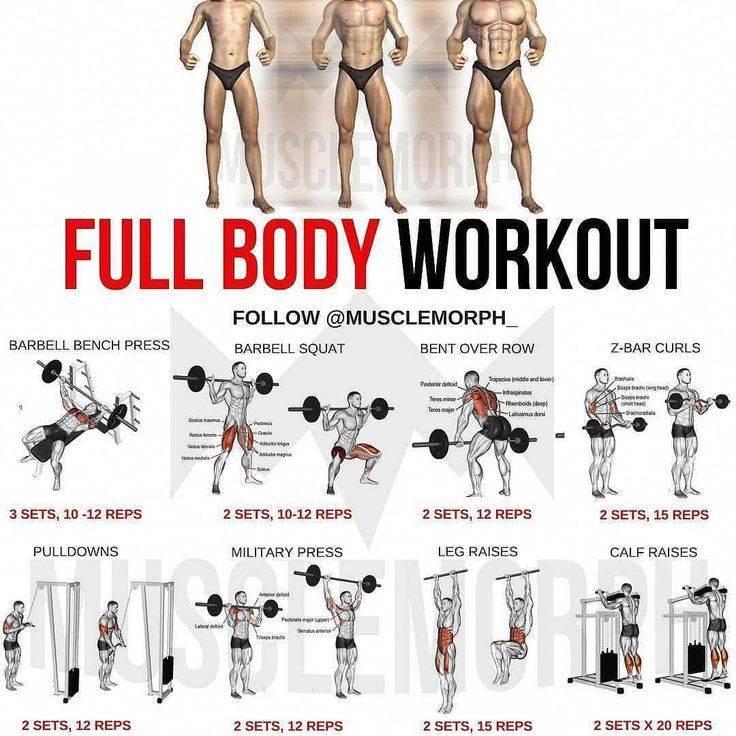 Фулбоди тренировка — sportfito — сайт о спорте и здоровом образе жизни