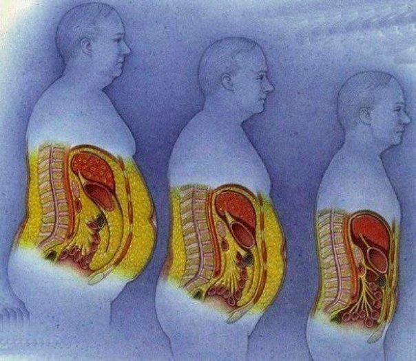 Как сжечь подкожный жир: научная стратегия похудения | бомба тело