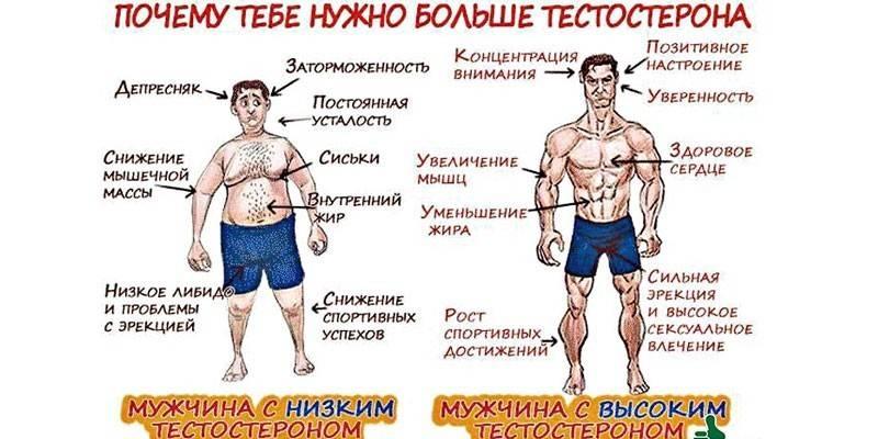 Снижение уровня тестостерона: причины и признаки