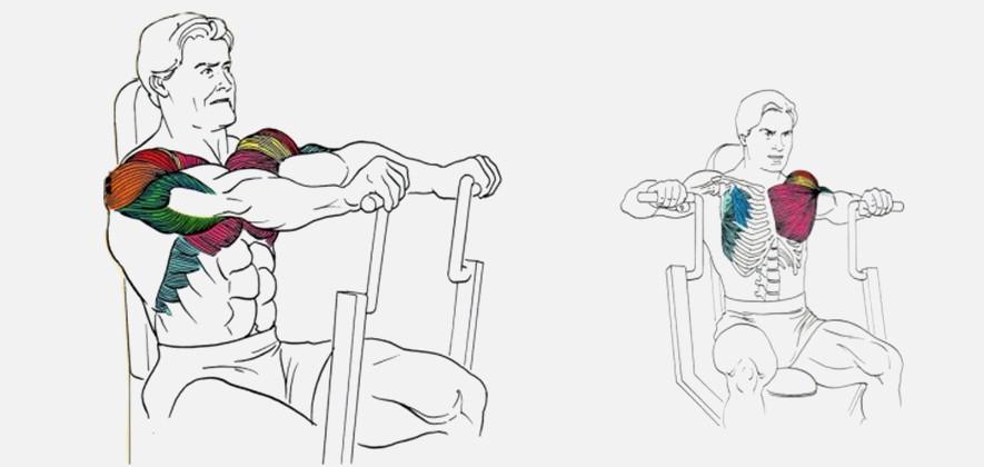 Жим от груди сидя в грузоблочном тренажере – суровая мужская правда