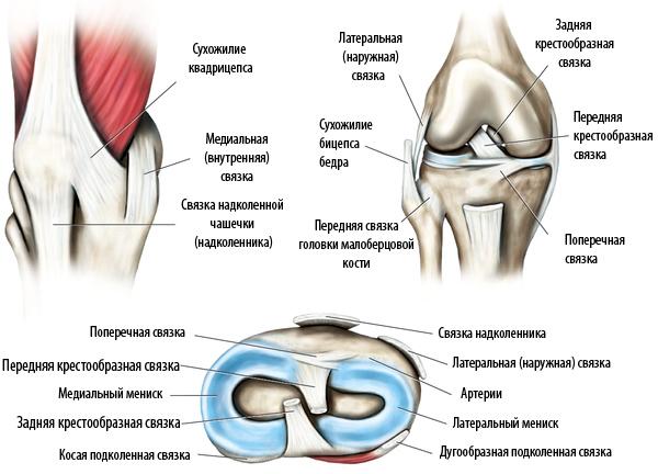 Как укрепить суставы и связки коленного и плечевого сустава - правильное питание, упражнения, прием биодобавок