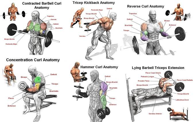 Упражнения для рук: бицепс и трицепс