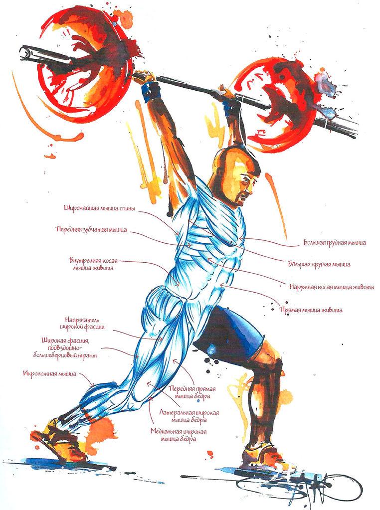 Кроссфит упражнения – полный перечень