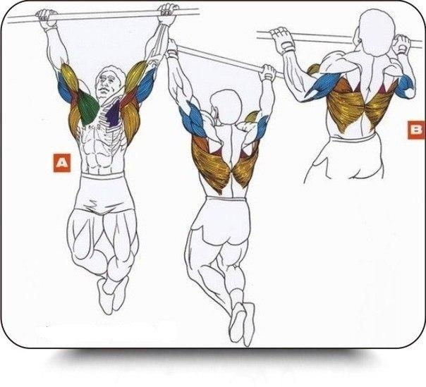 Подтягивания на перекладине: техника выполнения, какие мышцы работают