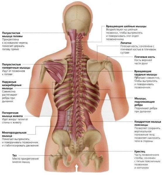 Боль под правой лопаткой сзади со спины