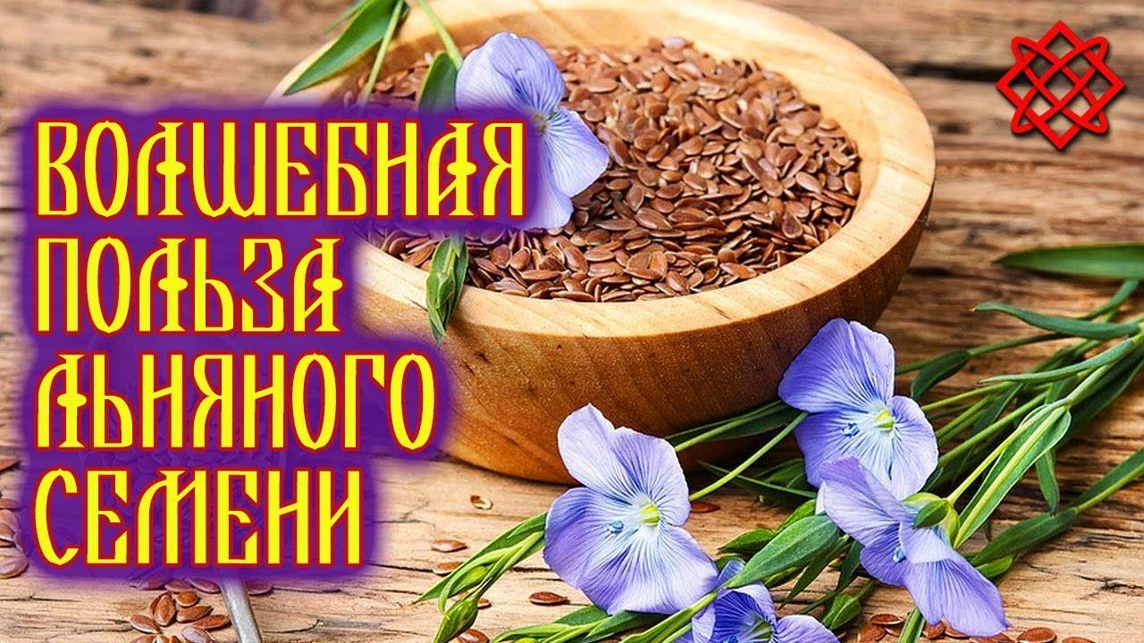 Семена льна – применение, лечение. как принимать, польза и вред