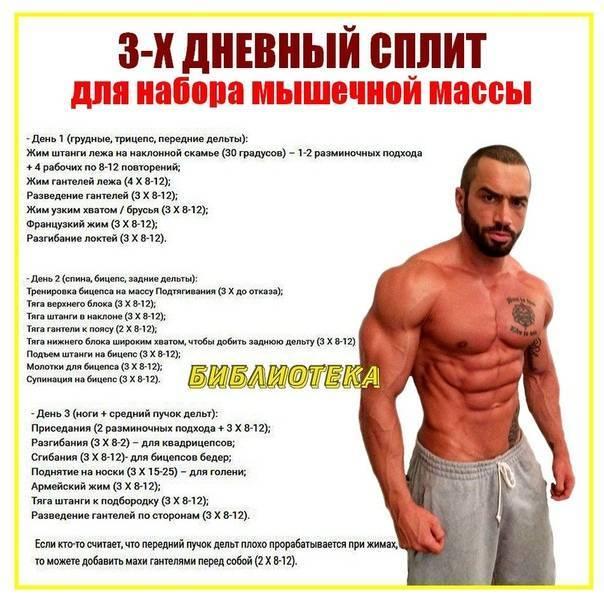 Программа тренировок на массу