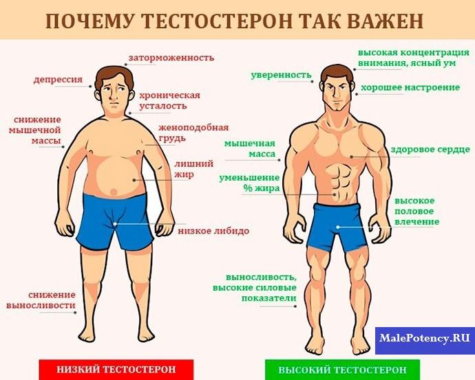 Продукты, понижающие тестостерон у женщин и мужчин