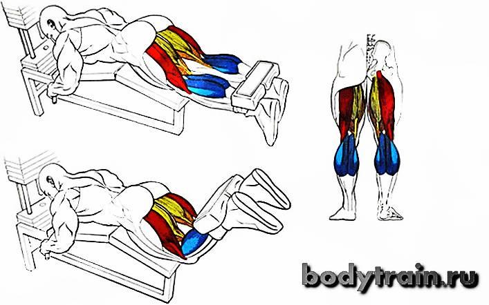 Сгибание ног в тренажере сидя: техника выполнения, какие мышцы работают