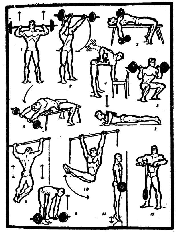 Атлетическая гимнастика: виды, цели, программы :: syl.ru