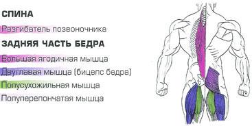 Разгибатели позвоночника длинные мышцы спины