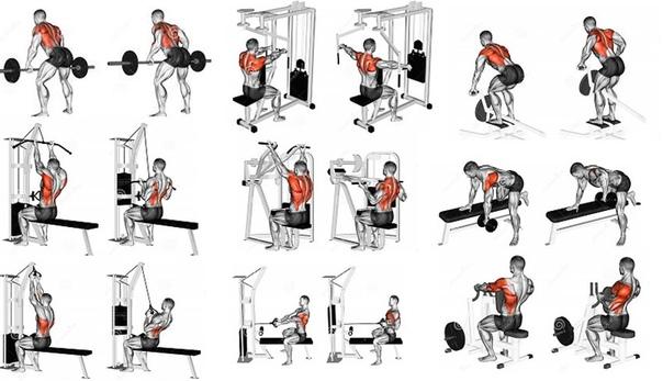 Упражнения на спину девушкам для тренировки в тренажерном зале | rulebody.ru — правила тела