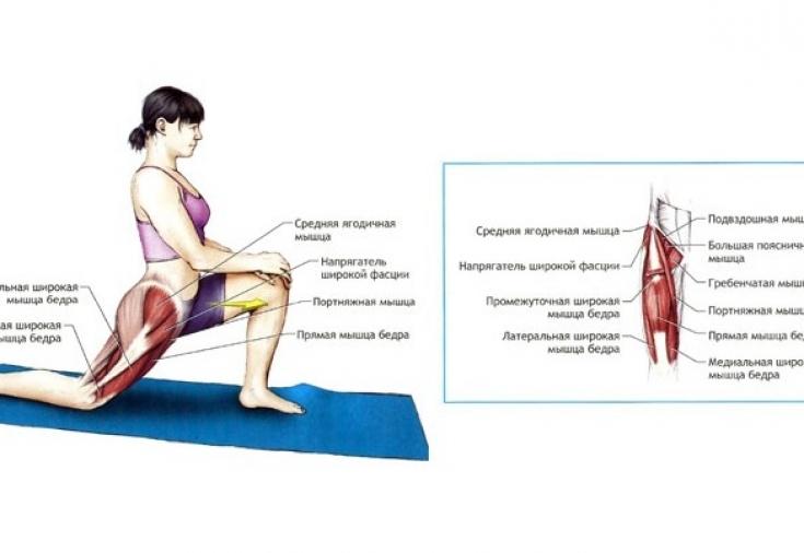 Подвздошно-поясничная мышца: где находится и как укрепить
