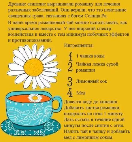 Ароматный ромашковый чай: польза и вред нежного напитка. мифы и научные факты о пользе и вреде ромашкового чая для людей - автор екатерина данилова - журнал женское мнение
