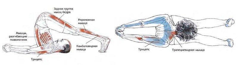 Подробное описание, какие мышцы задействованы при езде на велосипеде
