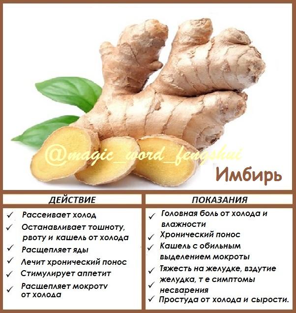 Имбирь: полезные свойства и противопоказания, рецепты для лечения, описание и виды, выращивание