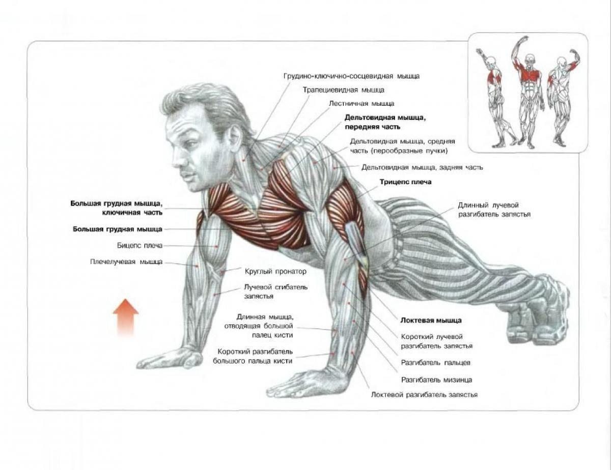 Мышцы стабилизаторы позвоночника упражнения