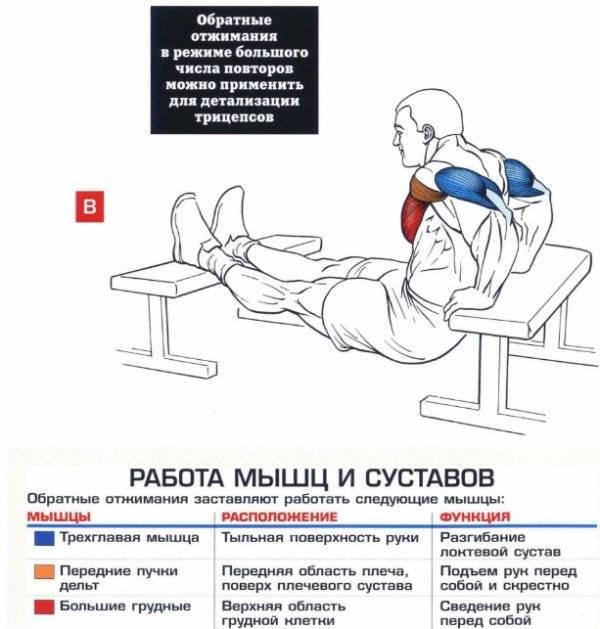 Отжимания от скамьи: виды и техника выполнения - tony.ru