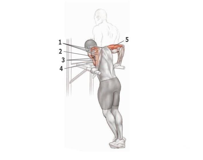 Правильные отжимания на брусьях ☛ разбор упражнения и техники выполнения