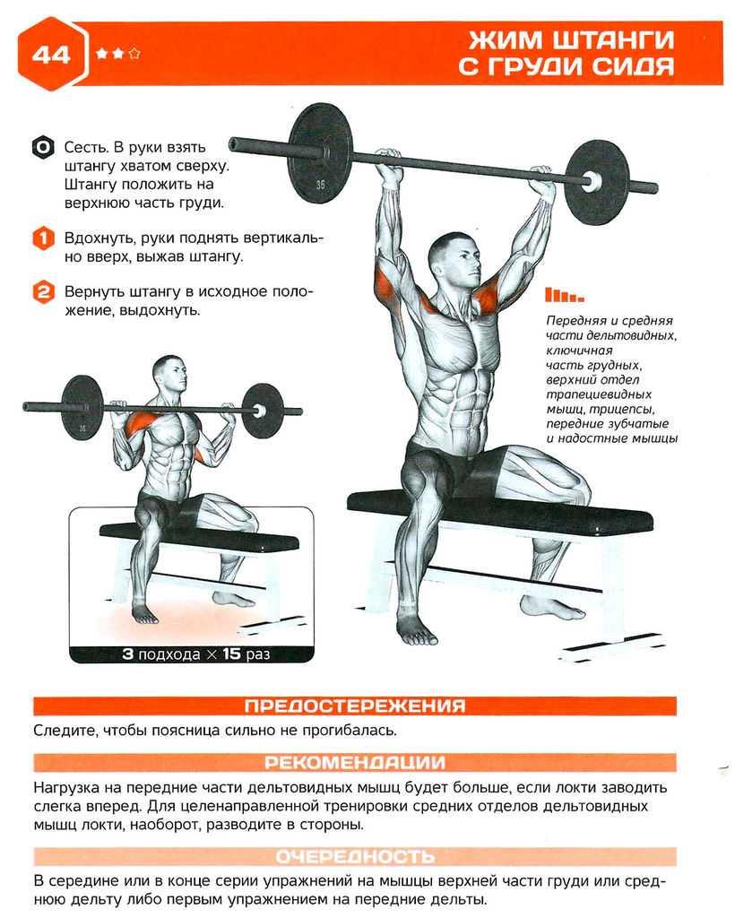Жим гантелей сидя: мышцы, полная техника выполнения, альтернативные варианты и тренировки плеч