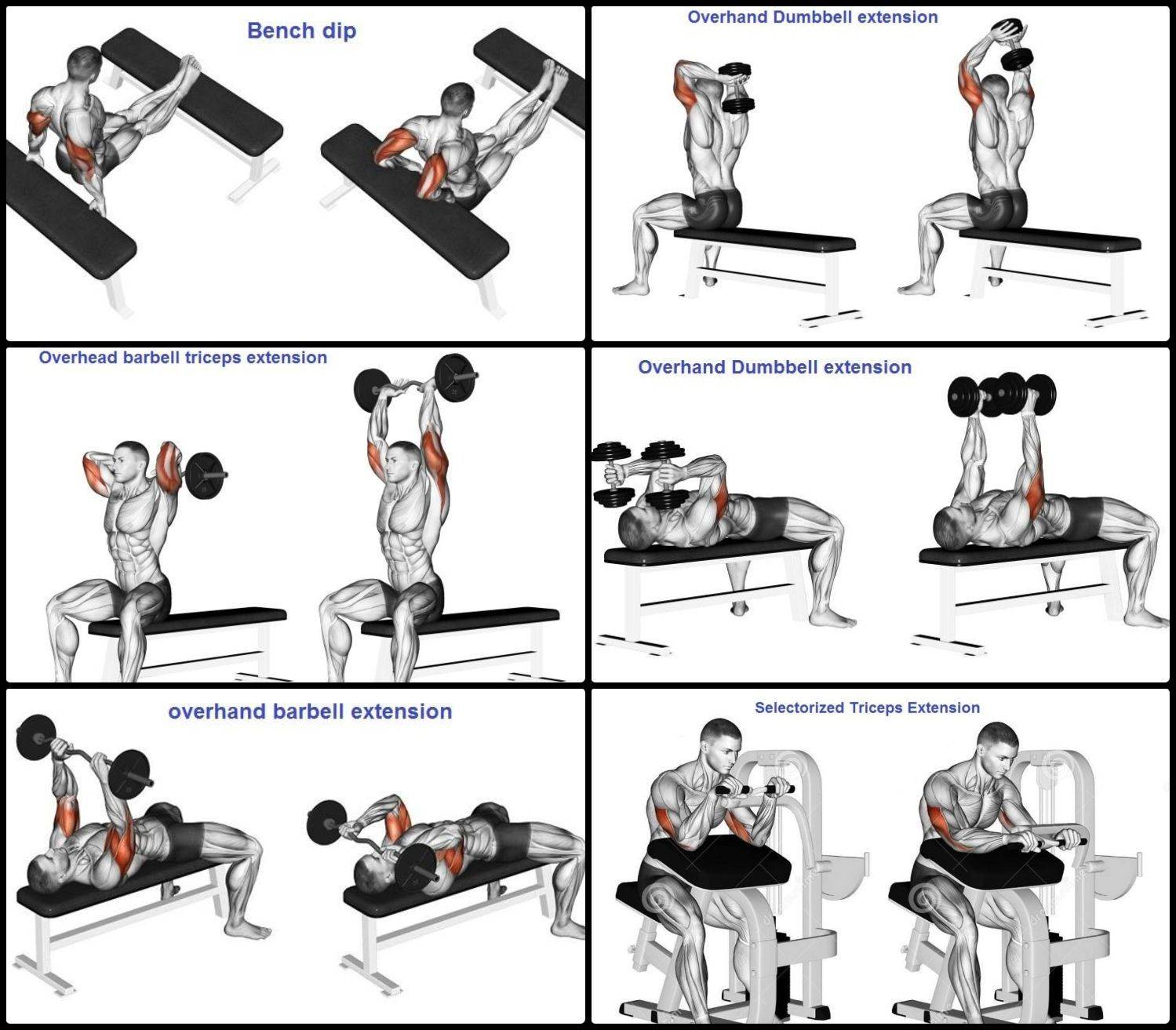 Программа тренировок  для мужчин. мужчина тренажерный зал.